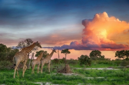 Южна Африка с водопада Виктория и Ботсвана