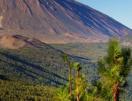 Канарските острови - Тенерифе 2020